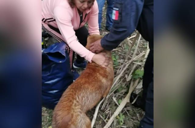 Rescatan a perro atrapado en pozo, en Yanga