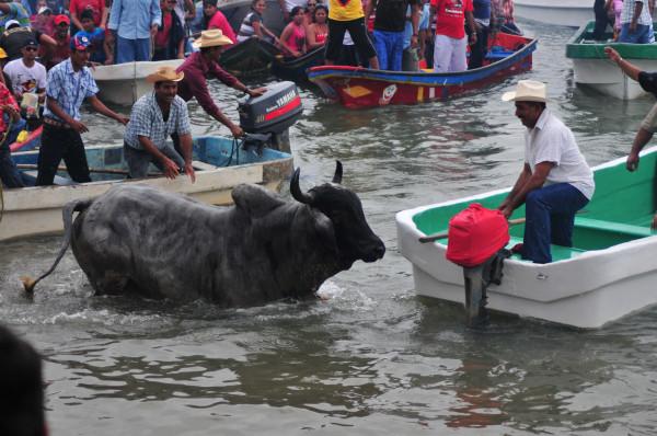 Vigilarán defensores de animales embalse de toros en Tlacotalpan