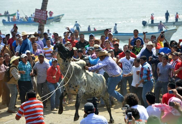 No habrá embalse de toros en Tlacotalpan, juzgado negó amparo
