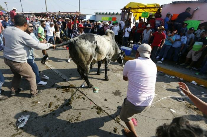 Defensores de fiestas y tradiciones exigen derogar ley de protección animal