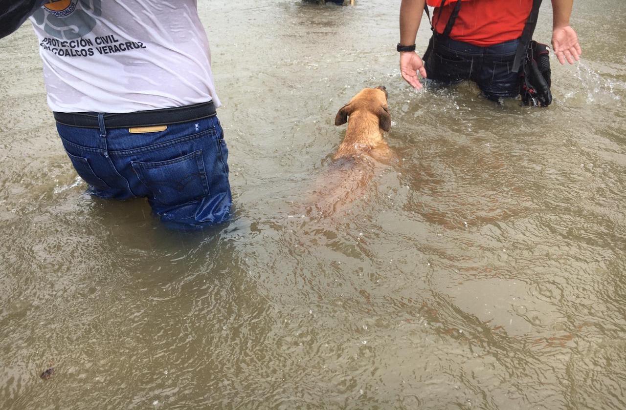 En Coatza, también rescataron perros abandonados por lluvias