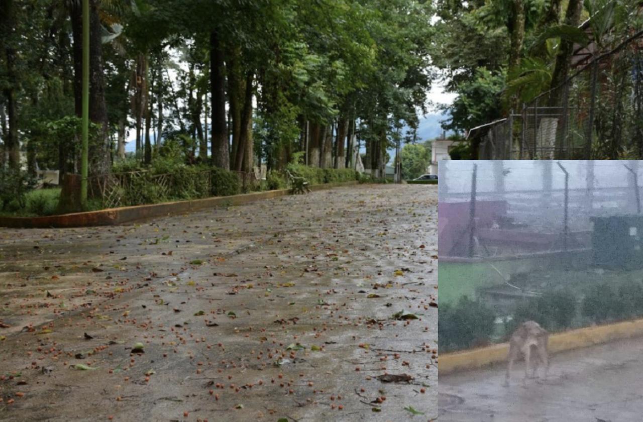 En Huatusco, rescatan con vida a perro enterrado en Alameda