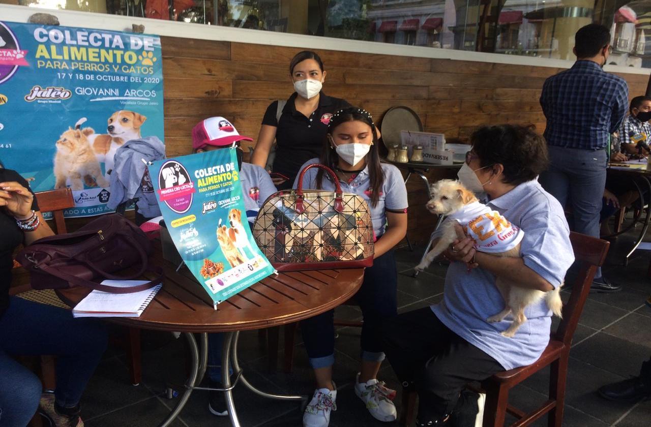 En pandemia, se disparan abandonos de mascotas en Xalapa
