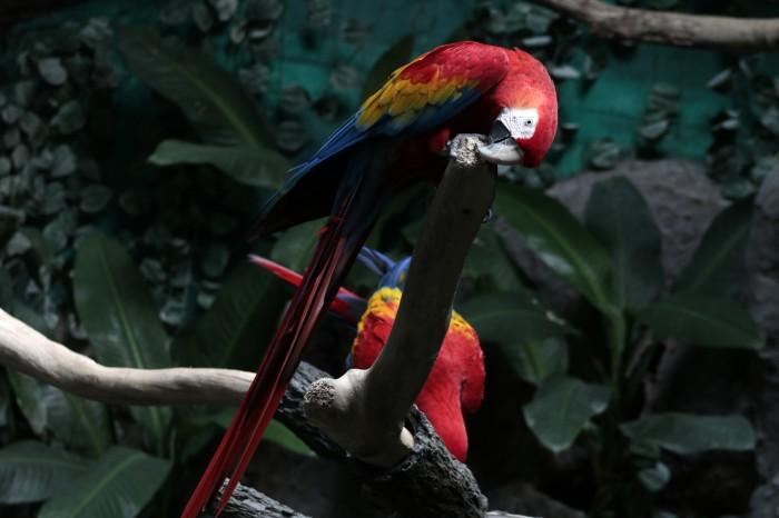 En México 985 especies están en peligro de extinción