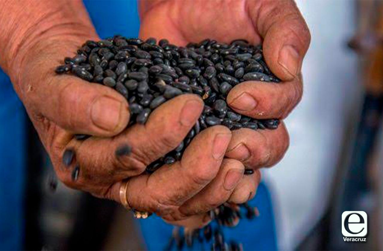 Este martes, campesinos de Altotonga venderán frijol en Xalapa