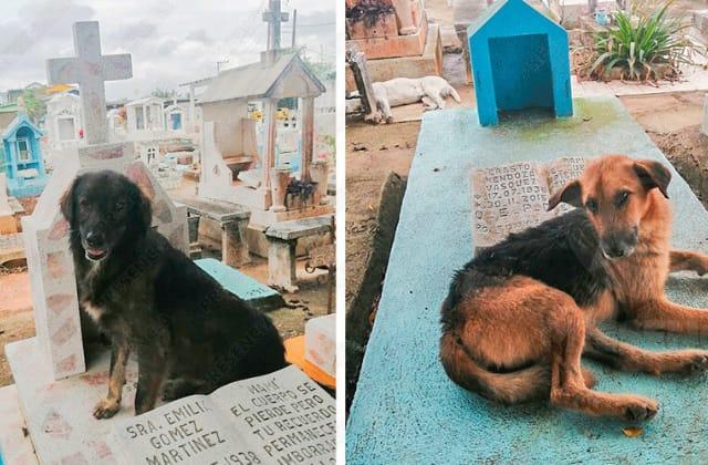 'Oso' y 'Pata', los vigilantes del panteón de Las Choapas