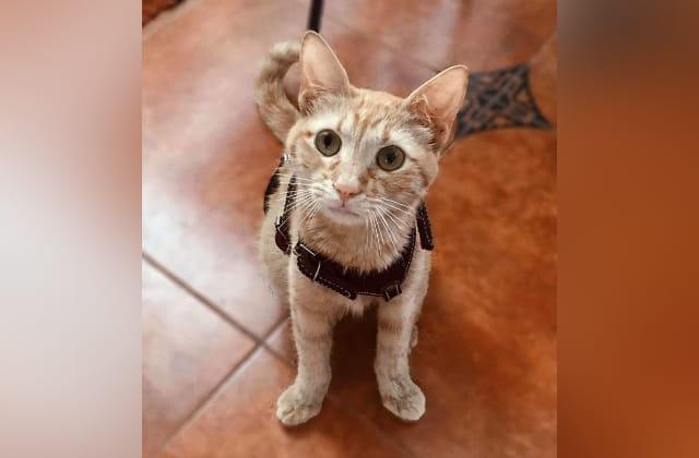 Denuncian ataque sexual contra gatita, en Agua Dulce