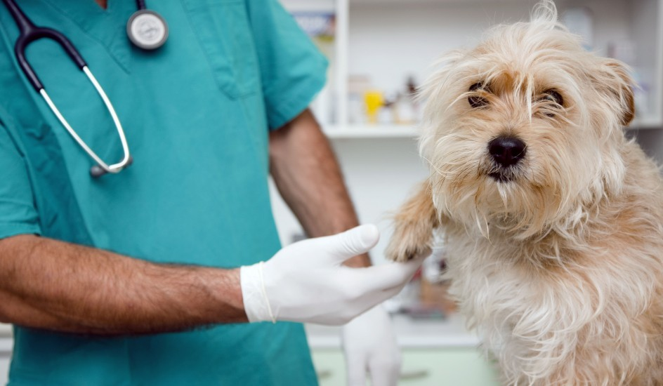 5 puntos claves sobre la ley que castigaría negligencia veterinaria en Veracruz