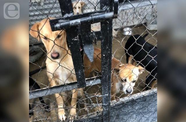 Por cambio de administración, sacrificarán perros en instalaciones de Tehuacán