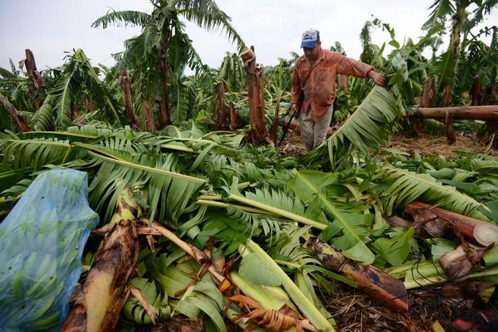 Agrosemex valuará el monto de pérdidas de cultivos en la zona norte