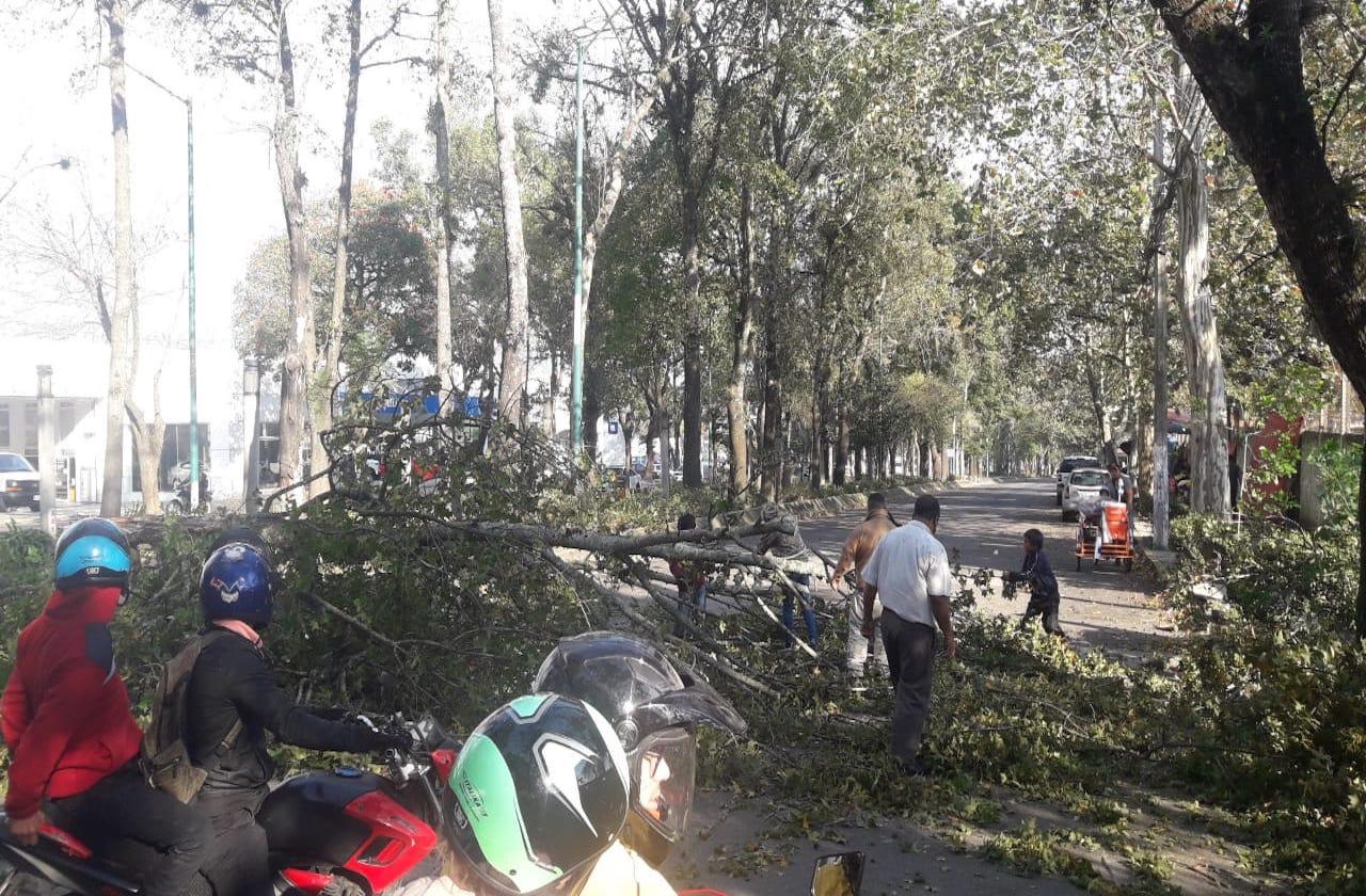 Frente Frío 23 deja árboles caídos en Xalapa