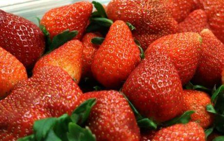 Los jornaleros que sufren para que disfrutes tus fresas