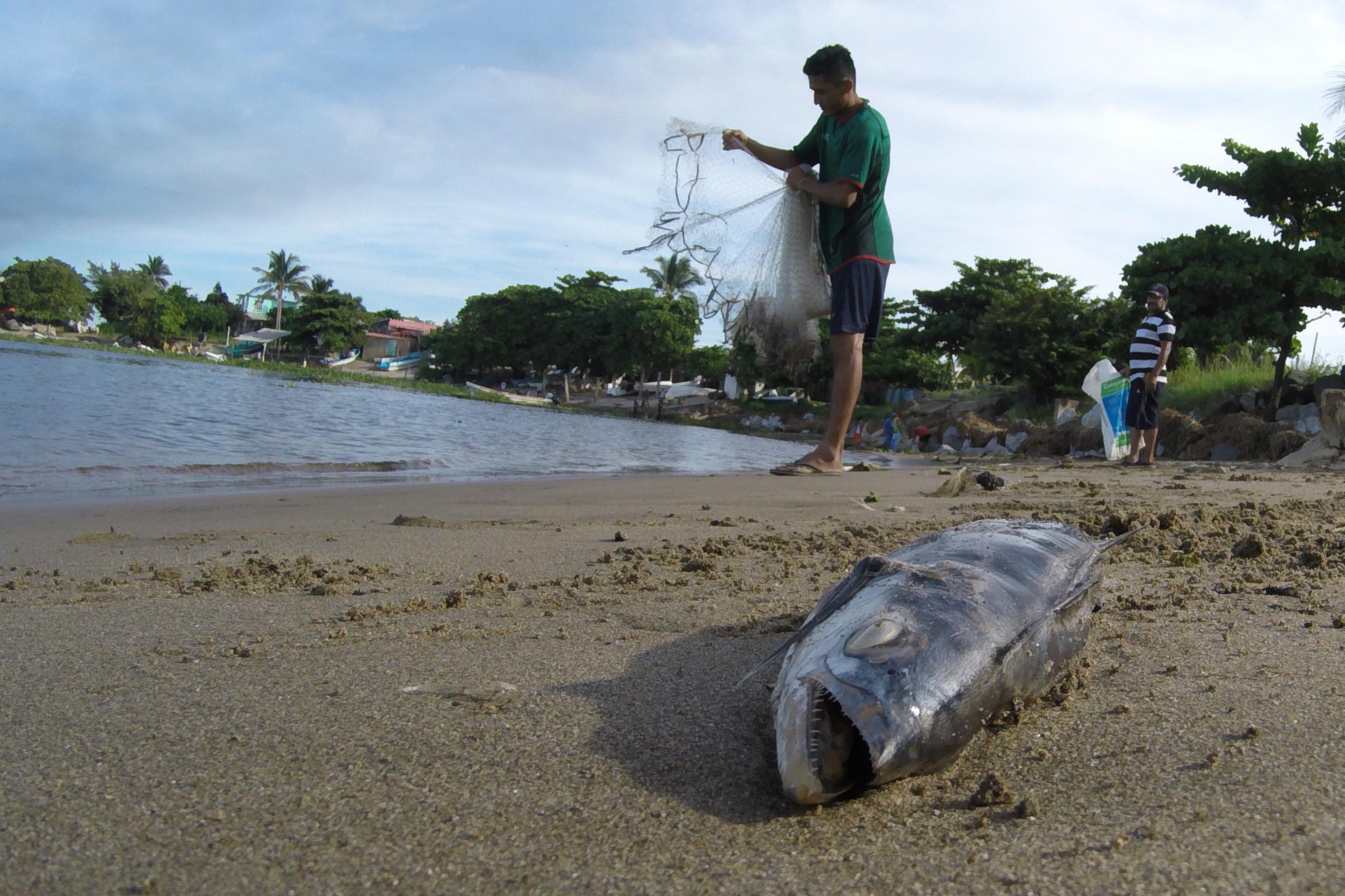 Aparecen peces y tortugas muertas en costas del sur