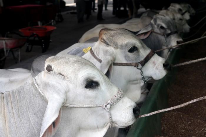 Nuevas disposiciones de Sagarpa para facturación de compra y venta del ganado