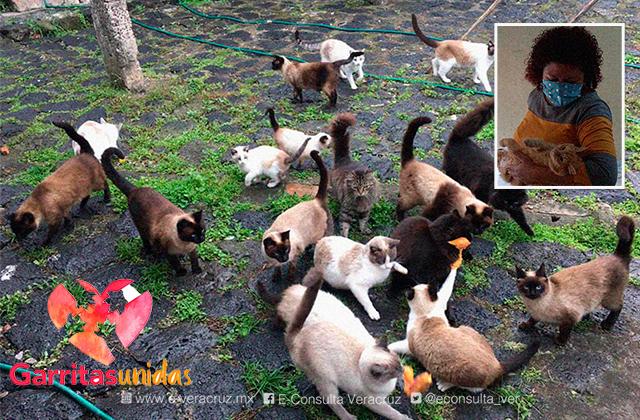 Garritas Unidas Xalapa, al rescate de gatos y perros abandonados