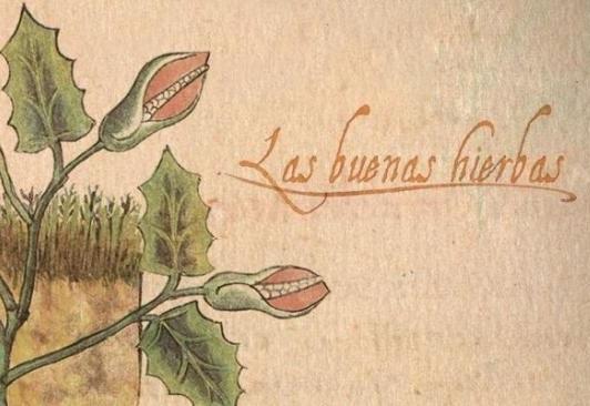 La medicina alternativa y otras yerbas de los mexicanos