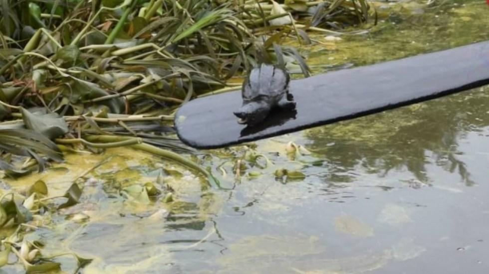 Líquido contaminante en arroyo de Nanchital mata a peces; personas en riesgo