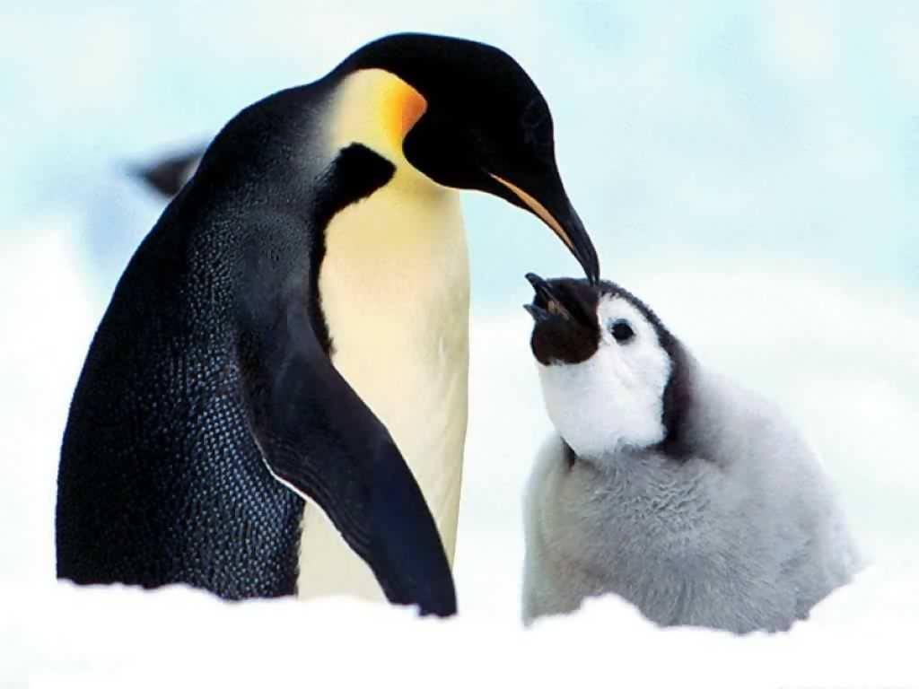 Para verano, el pingüinario del Acuario de Veracruz