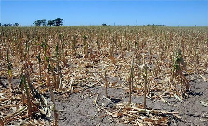 Apoya SEDARPA a productores afectados por sequía