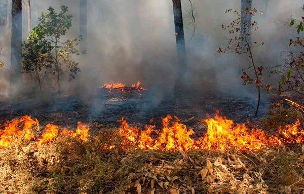 Incendio afecta manglar en Tecolutla.