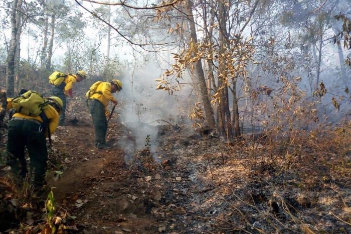 Cuatro incendios en Veracruz afectaron casi 300 hectáreas