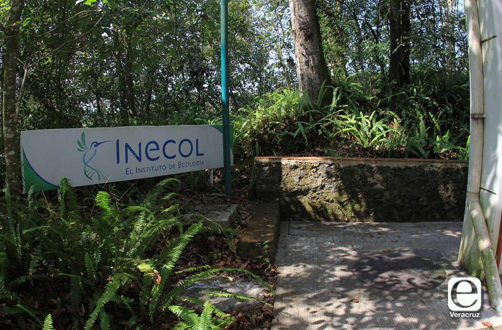 Inecol sufre recortes, exhortan a colaboradores a invertir