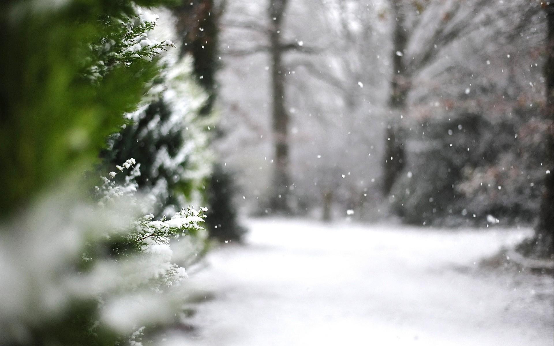 10 datos curiosos que debes saber sobre el invierno