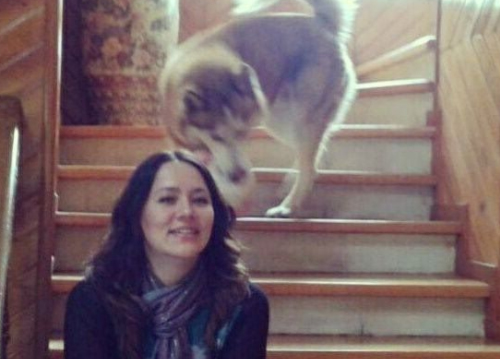 Encargada de Comunicación Social de PVEM vende perros en Facebook