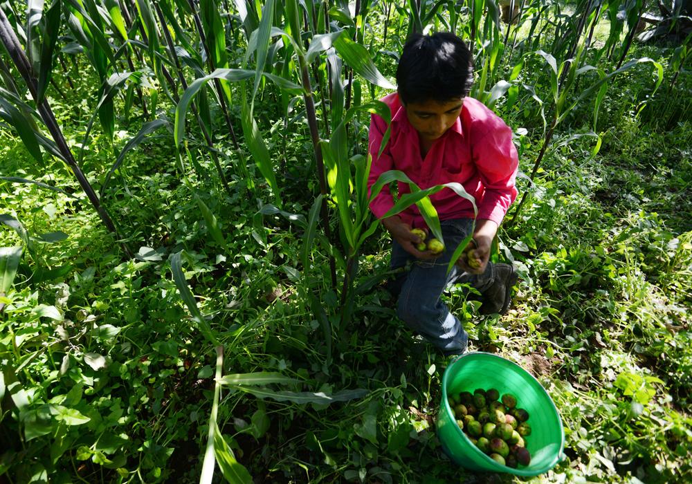 Jornaleros agrícolas, vulnerables a fraudes