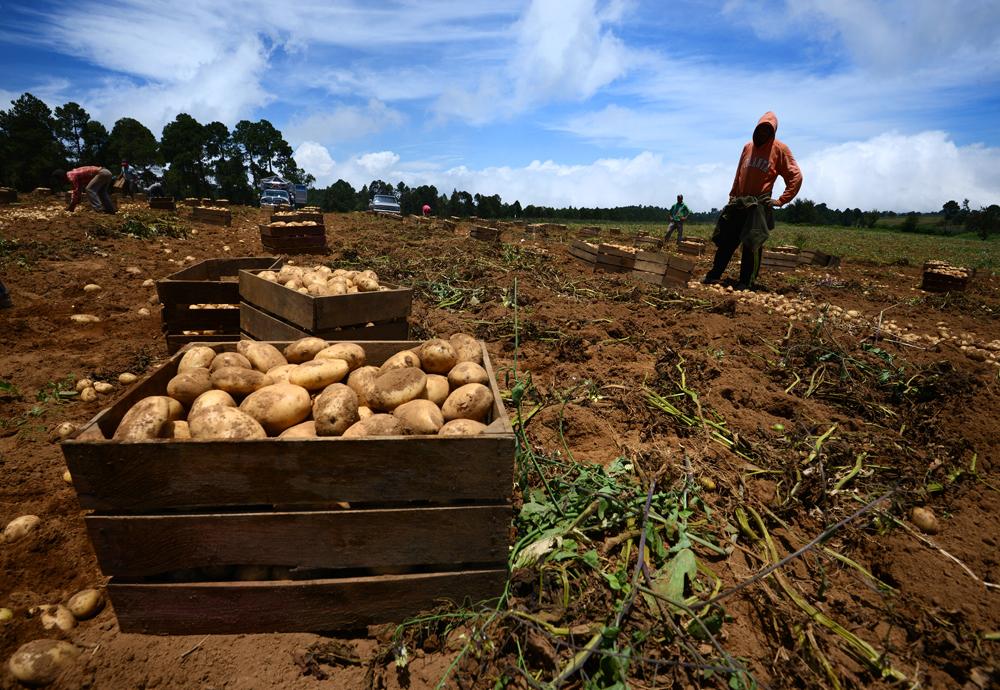 Partirán 2 mil jornaleros a campos agrícolas del norte del país