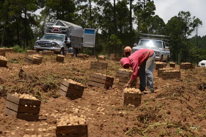 Discriminación laboral a mexicanos en campos de EU