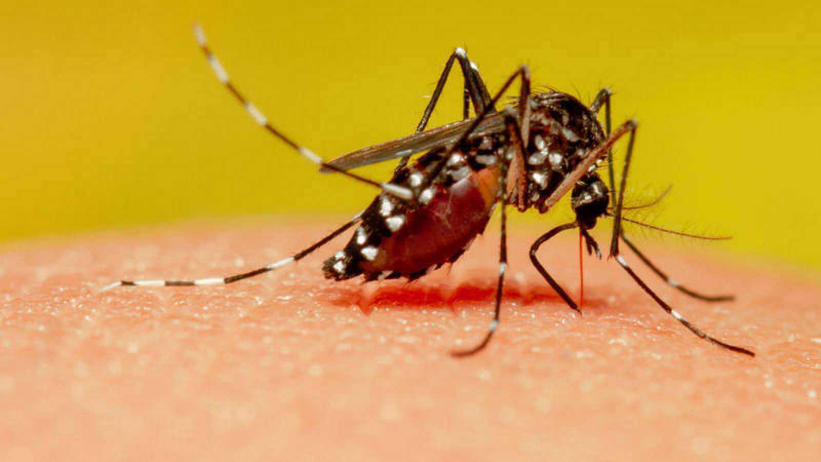 Xalapa presenta 150 casos de dengue