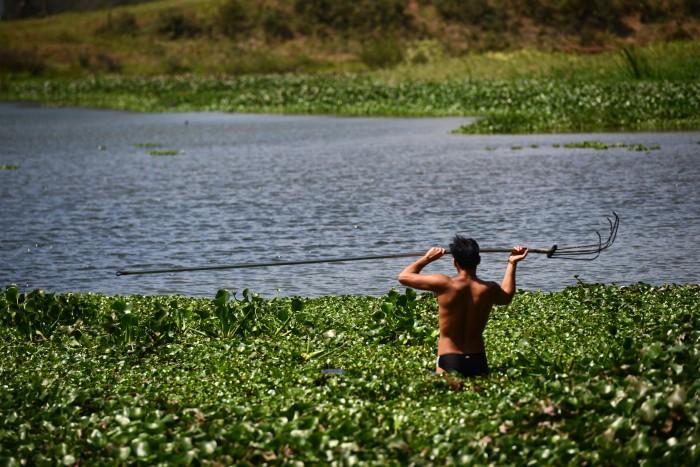 Ejidatarios denuncian tala en laguna de El Castillo