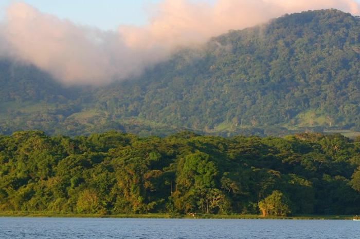 AMLO ofrece 5 mil pesos mensuales para la siembra de árboles