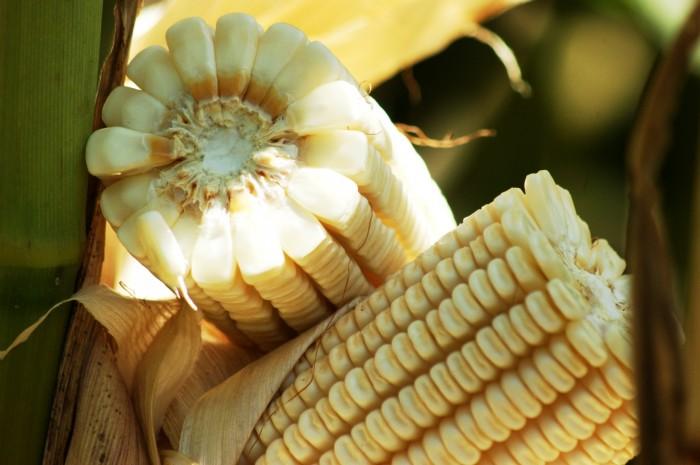 En riesgo la independencia alimentaria en Veracruz