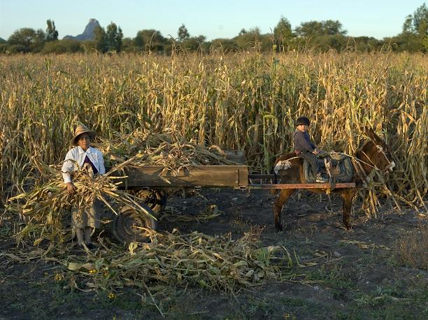 Campesinos piden reactivar el campo; hay migración y pobreza