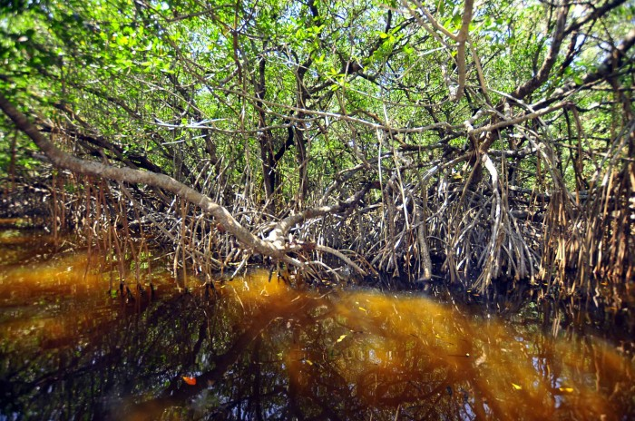 """""""Preocupantes"""" reformas federales en materia de medio ambiente: UV"""