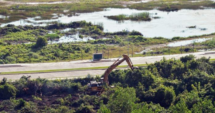 Con permiso de Fonatur, policía local destruye manglar de Cancún en la madrugada