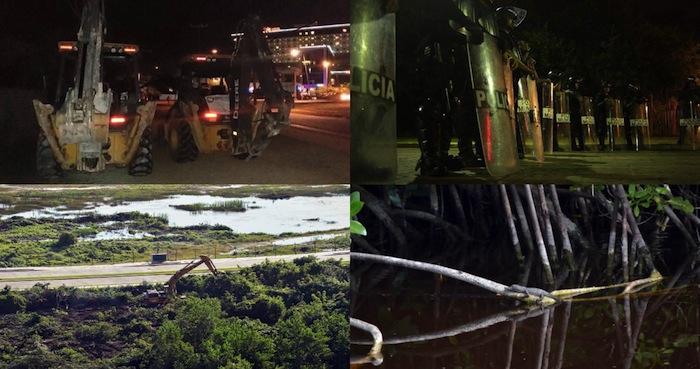 """La destrucción en Tajamar, QRoo: """"Rellenaron el manglar y sepultaron cocodrilos vivos"""""""