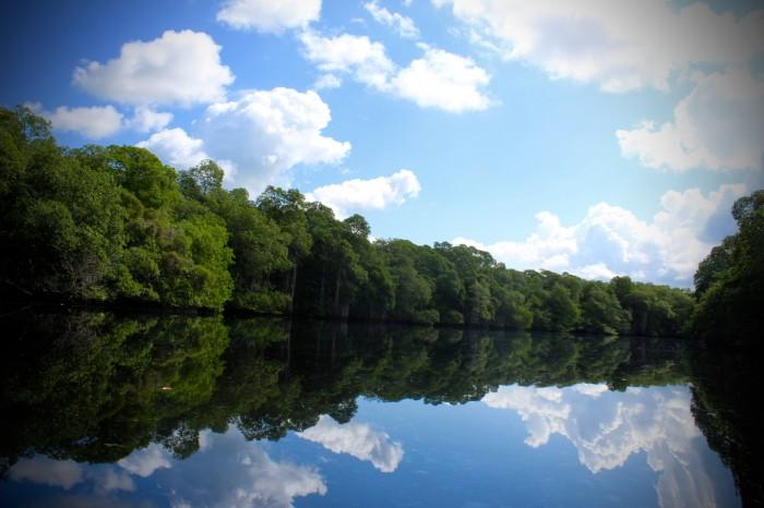 Bajan recorridos turísticos por la zona de manglares hasta 40%