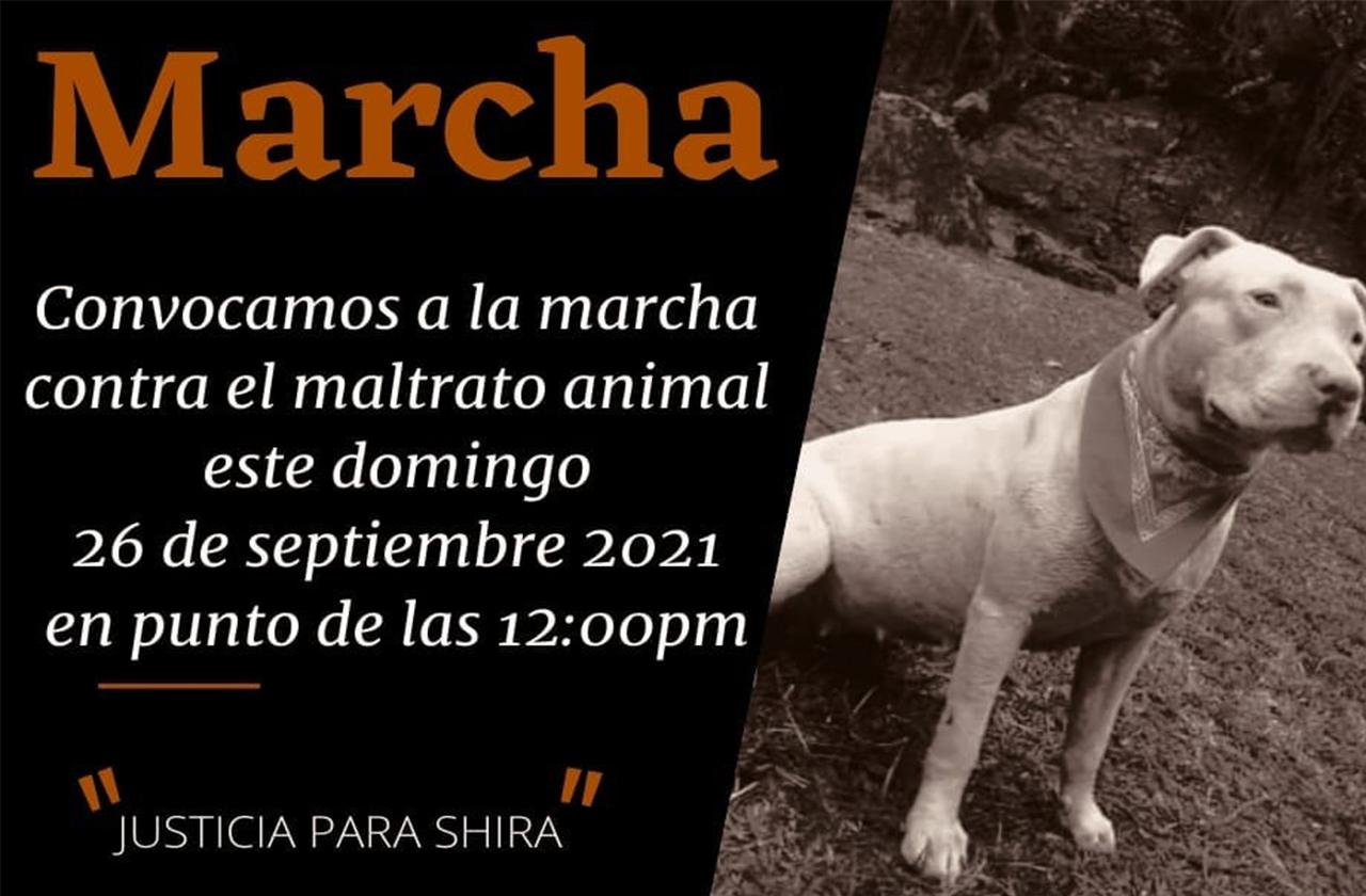 Marcha contra el maltrato animal en Rafael Delgado