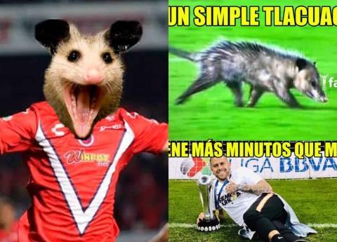 """""""Jarochito"""" el tlacuache del partido de Veracruz ya tiene memes"""