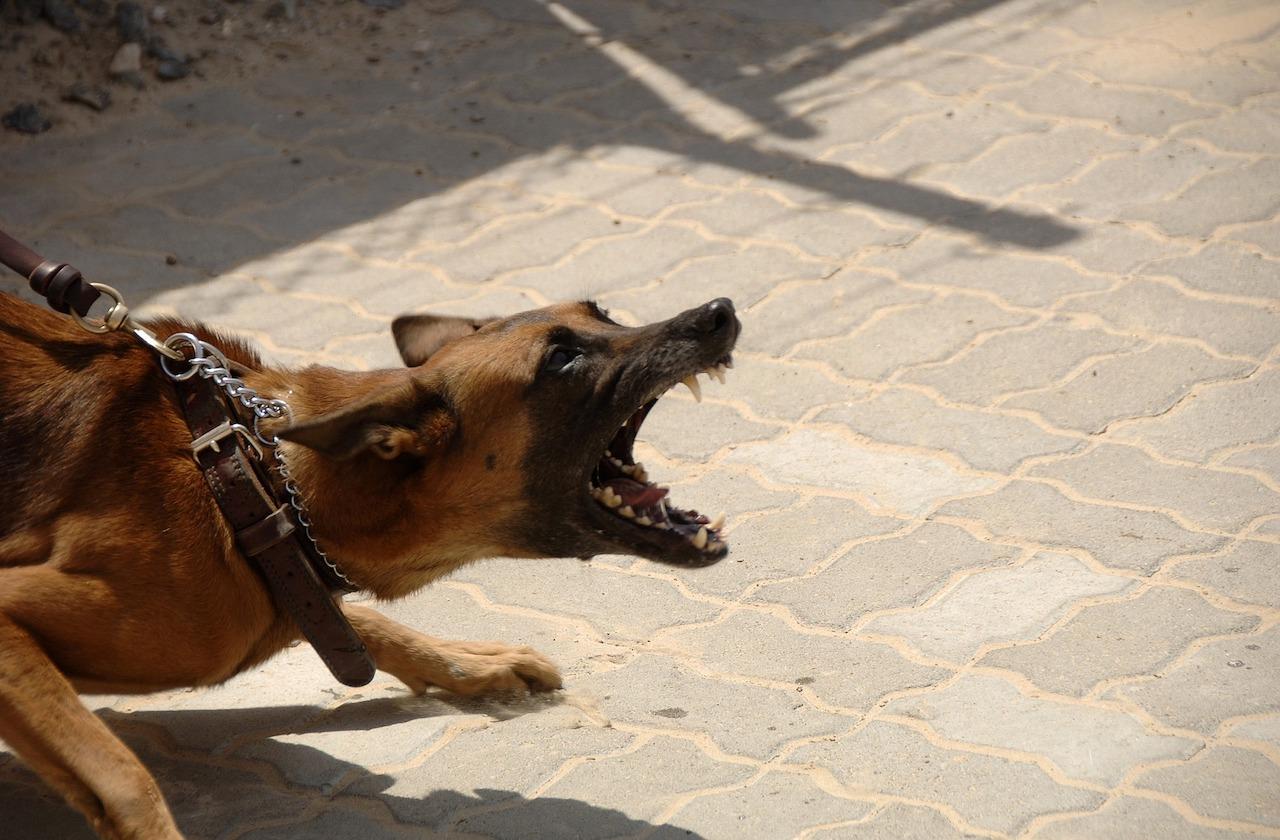 Menor, grave tras ataque de perro en Ixtaczoquitlán