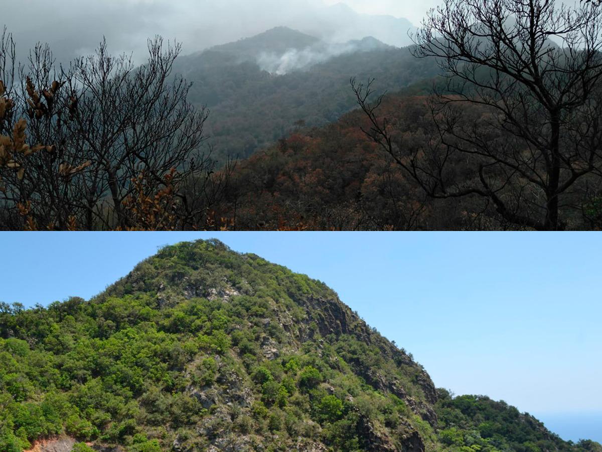 Cuitláhuac señala a mineras por incendios forestales; ya se investiga el de Alto Lucero