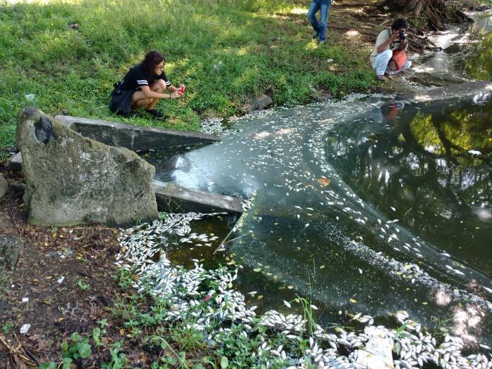 Mortandad de peces en la Laguna Ilusión del puerto de Veracruz