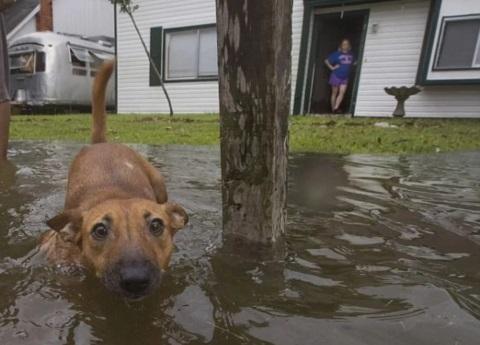 Tras el huracán, Otis encontró cómo sobrevivir