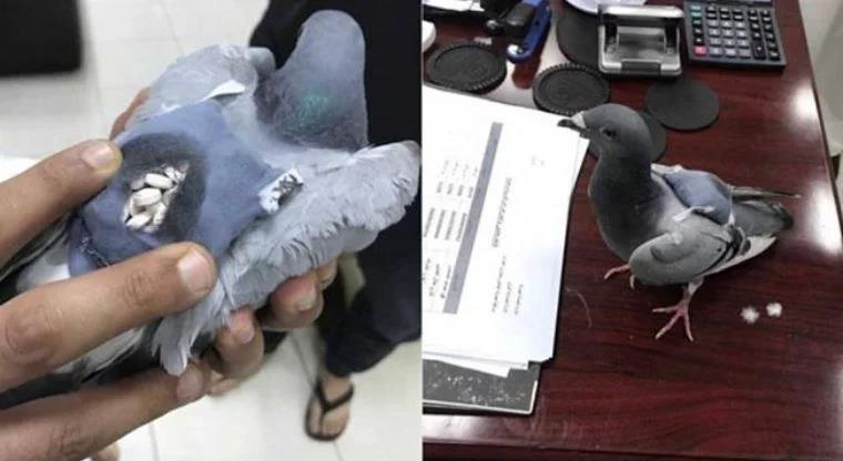 Policía abate a 'narco paloma' que entraba a penal