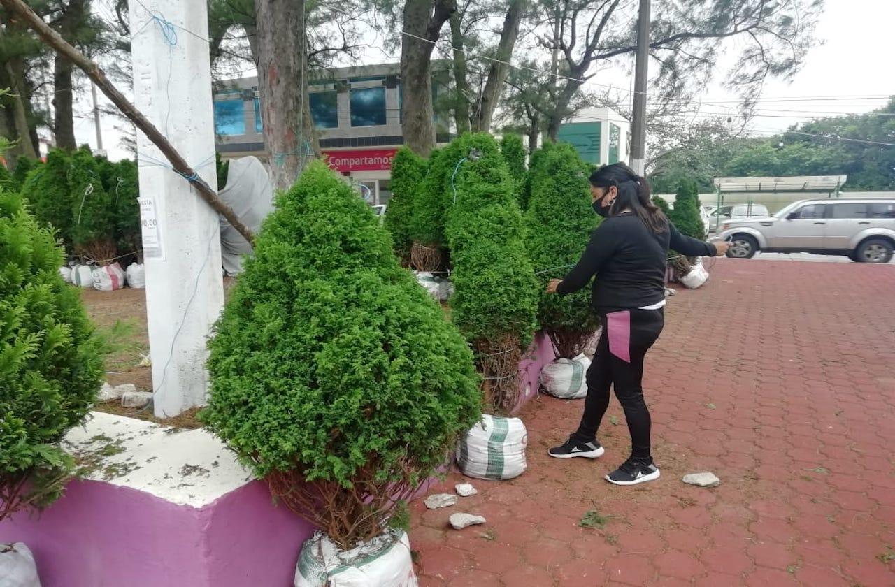 Pandemia afecta a comerciantes de pinos navideños en Coatza