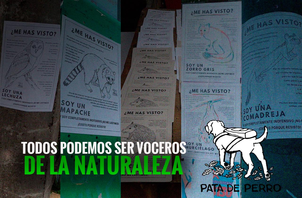Pata de perro, colectivo de Xalapa que protege animalitos silvestres