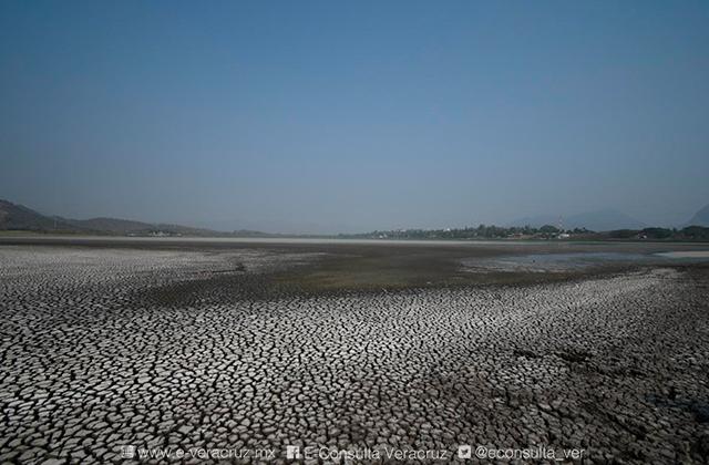 Patos y pelícanos mueren entre el lodo de laguna seca en Veracruz